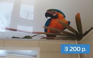 Натяжной потолок на кухню 4 м²